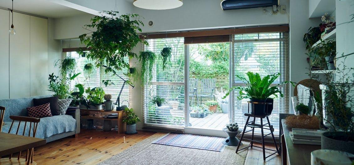 植物のある暮らしの画像