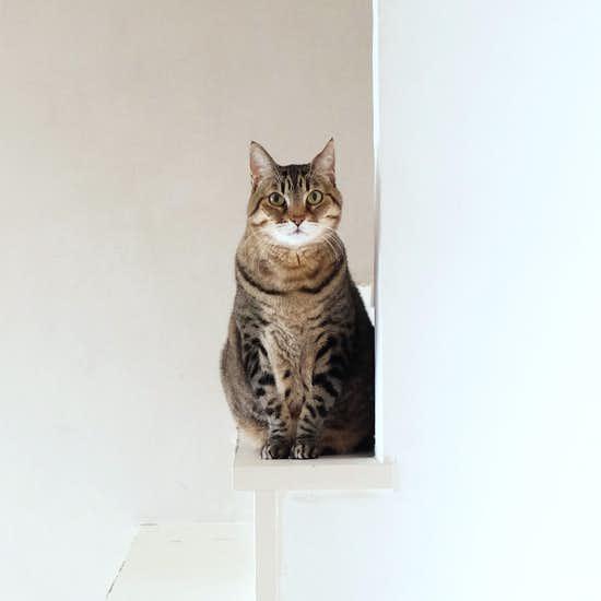 【我が家のイヌとネコ】第1話:取材カメラにちゃっかり写りこむ、看板娘のネコ。