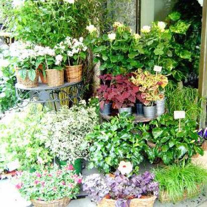 【特集|花屋のまかない】第2話:お気に入りの花屋を見つけよう。