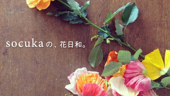 連載|socukaの、花日和。 最終話・第8回『大好きな紫陽花』