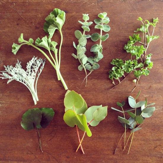 連載|socukaの、花日和。 第5回『グリーン×グリーン / 葉もの』