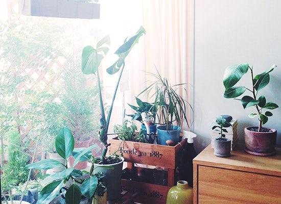 特集 小さな旅じたく。第5話:植物編 −お留守番の植物のためにできること−