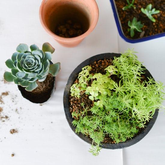 【特集|多肉とくらす】第二話:多肉植物の鉢選びと植え方のコツ。