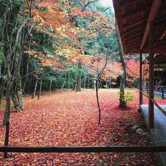【お出かけコラム】秋の京都へ行ってきました!