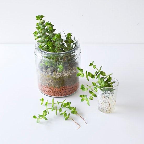 【スタッフコラム】あのとき寄せ植えした多肉植物は今・・