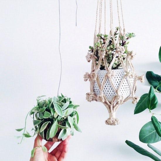 【店長コラム】植物「ぶらさげたい欲」とまらず。ハンギングボールとの付きあい方。