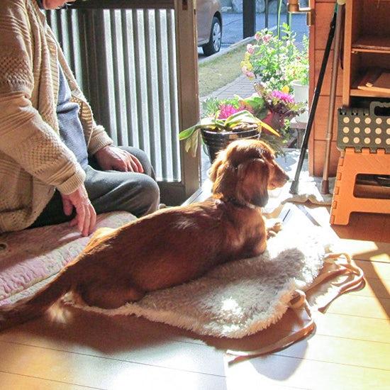 【イヌとネコのエピソード】第3話:クウちゃんはものすごく人間っぽいイヌでした