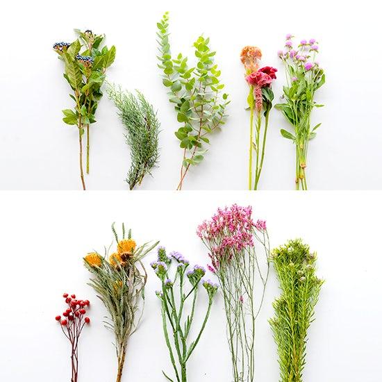 socuka_1_dryflower