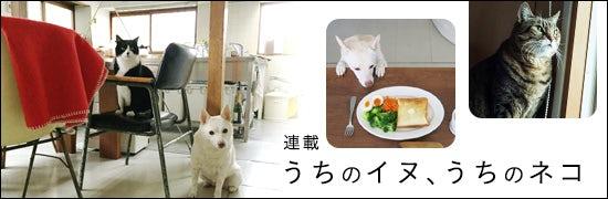 dogcat_tokusyuichiran_1601