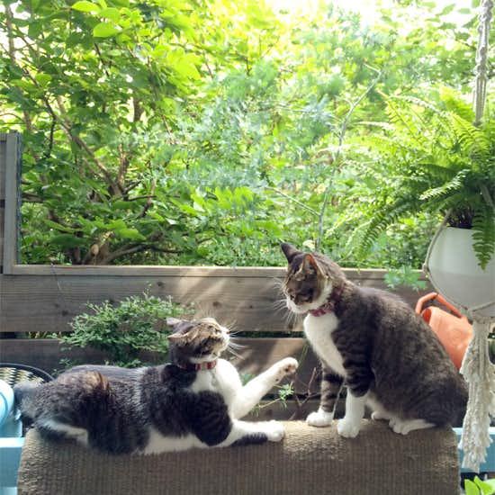 """【我が家のイヌとネコ】第3話:仕事中もスタッフの癒し役な猫3匹、まるで社員のようだから名付けて""""シャインズ""""。"""
