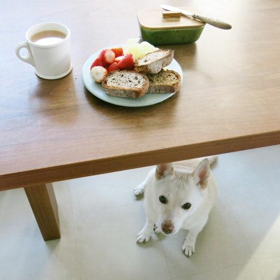 【我が家のイヌとネコ】第2話:パンが大好きな犬とマイペースな猫たち、動物にかこまれて暮らす家。