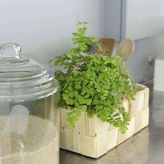 【観葉植物の選び方・育て方】第2話:買ってきたばかりなのに、元気がなくなるのはなぜ?キッチンを彩る観葉植物3選