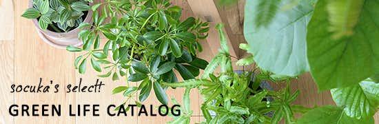 観葉植物の選び方・育てかたとインテリアのアイデア