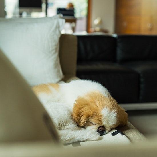【我が家のイヌとネコ】第6話:トトトッと歩いたから「トト」、おっとりマイペースな13歳のワンコ。