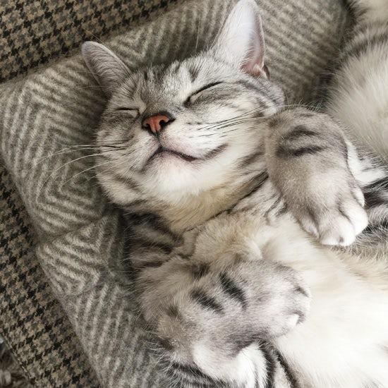 【我が家のイヌとネコ】第8話:内田彩仍さんの愛猫・クリム。かわいい寝姿やリラックスした表情をインテリアとともに。