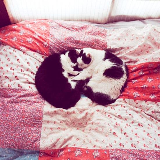 【我が家のイヌとネコ】第16話:家と仕事場を行ったり来たり、きままな2匹の猫姉妹と過ごしてきた16年。