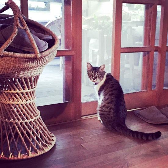 【我が家のイヌとネコ】第17話:北軽井沢へ移住、カフェをオープン。その暮らしのそばにいてくれたイヌとネコ。