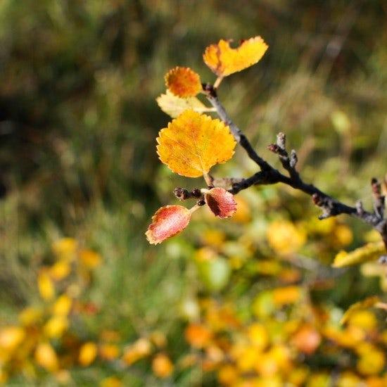 【ノルウェー日記】秋を感じるのは、どんなときですか?