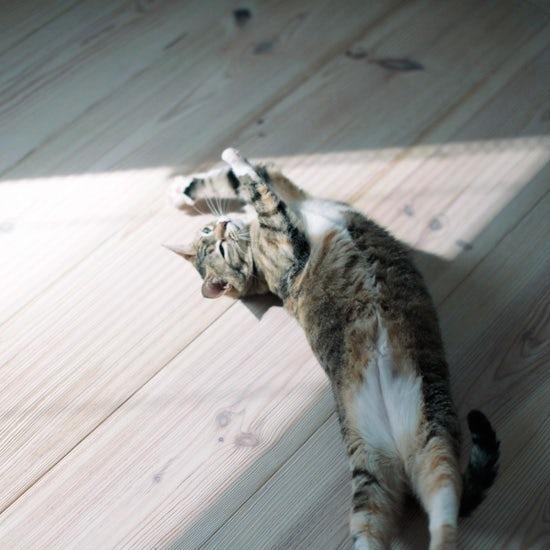 【我が家のイヌとネコ】第18話:「それでいいんだね」とホッと気楽になる、ネコとの暮らしから教わったしあわせ探し。