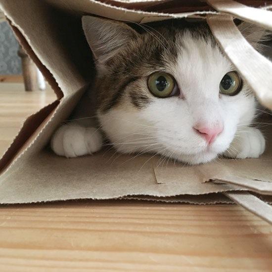 【我が家のイヌとネコ】第20話:コトバは通じないかもしれない、けれど気持ちは伝わってくる...猫との暮らし。