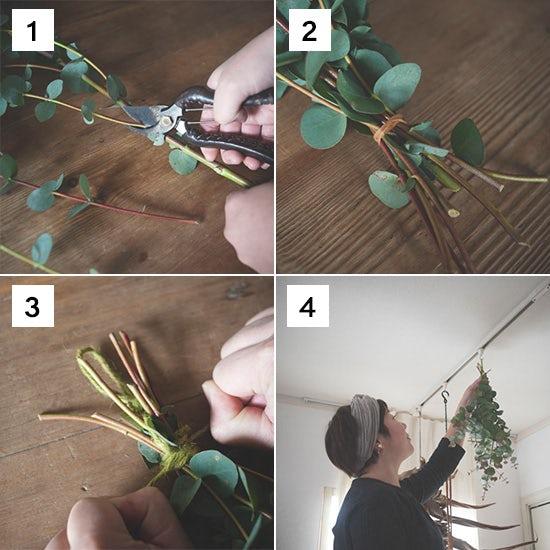 dry_eucalyptus_001