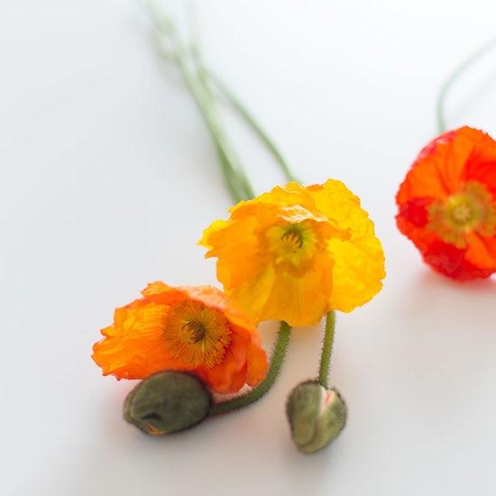 【今日のクラシコム】オフィスに春がやってきた!仕事場も花盛りです。