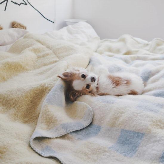 【うちのイヌ、うちのネコ】負けん気は強いけれど、冬になると甘えん坊。よしいちひろさんとoimoの暮らし