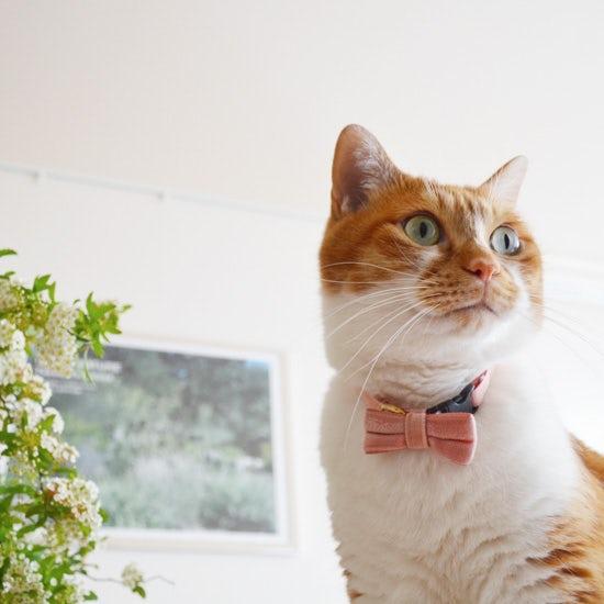 【朝の過ごし方】相棒は猫。リラックスして1日を始めるための、朝のひと工夫(山中玲奈さん)