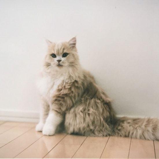 【バイヤーのコラム】あまのじゃくな猫に魅せられて