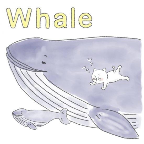 【ネコかるたイングリッシュ】「W」から始まる…「whale」