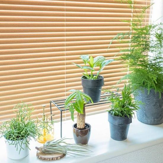 【出窓のインテリア】もっと窓辺を素敵に!グリーンで出窓をおしゃれに彩る方法