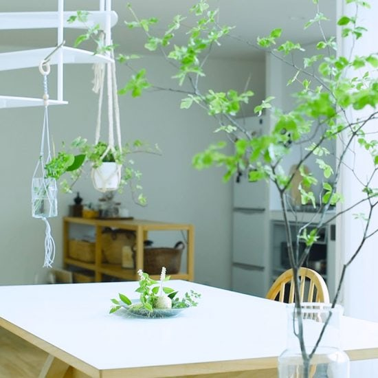 【クラシコムmovie】気持ちのいい部屋づくり、初夏のグリーン計画