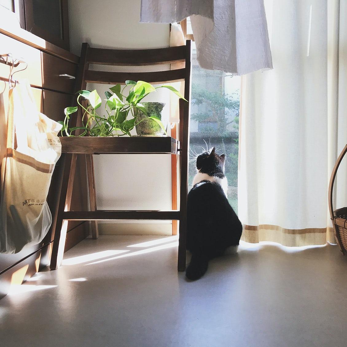 【わが家の朝支度】穏やかに穏やかに。猫と一緒に暮らす一人暮らしの朝
