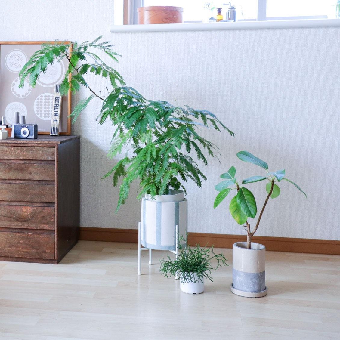 【インドアグリーンとの付きあい方】前編:鉢植えの元気を見極める、4つのチェックポイント&お手入れ法
