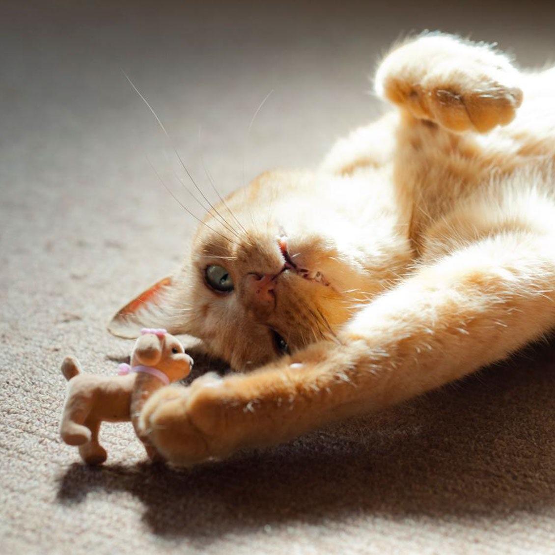 【うちのイヌ、うちのネコ】「今」を生きる達人のネコ2匹と。フォトグラファー砂原文さんが寄りそう14年