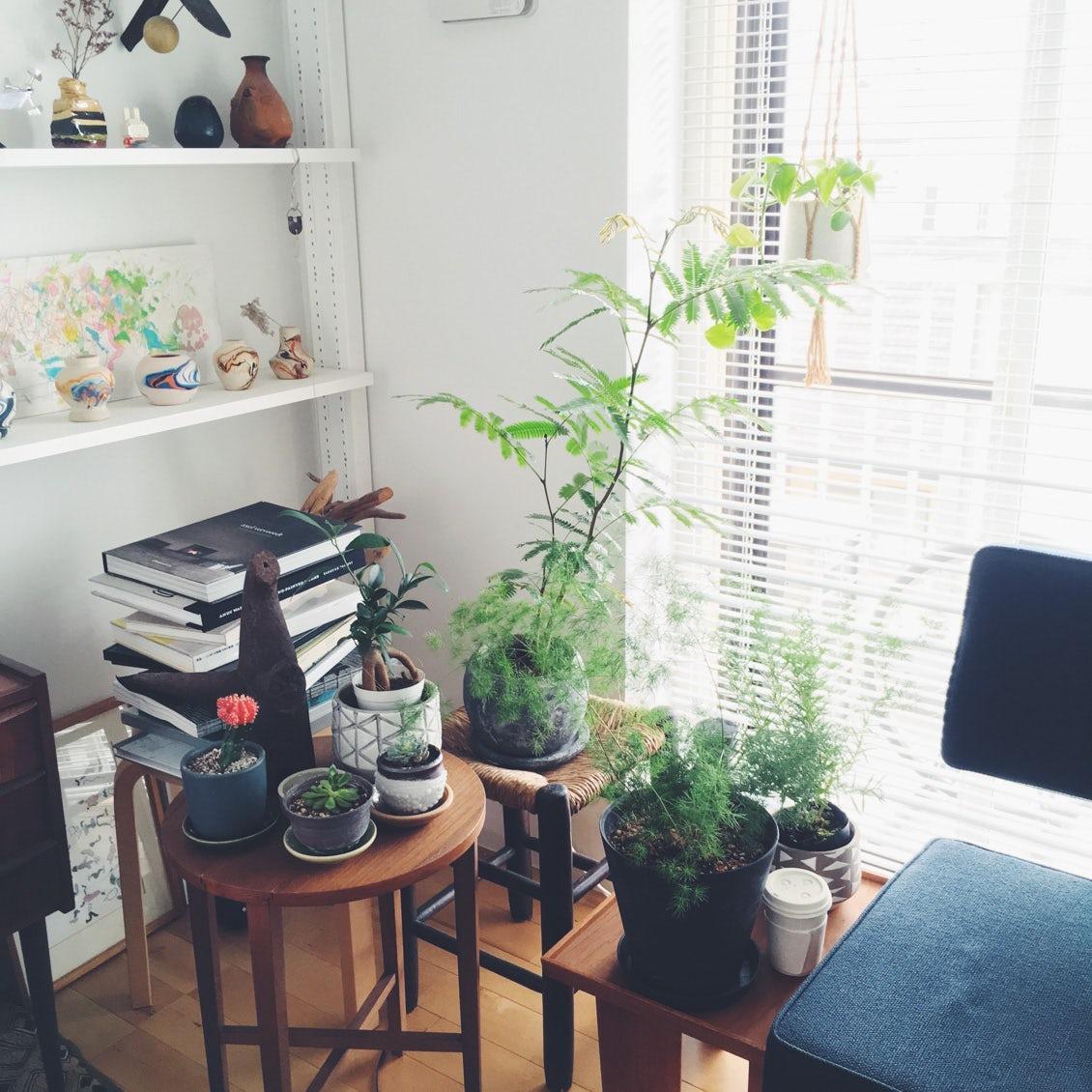 """【今日のクラシコム 】見て、育てて癒される。""""愛しの植物"""" 教えてください。"""
