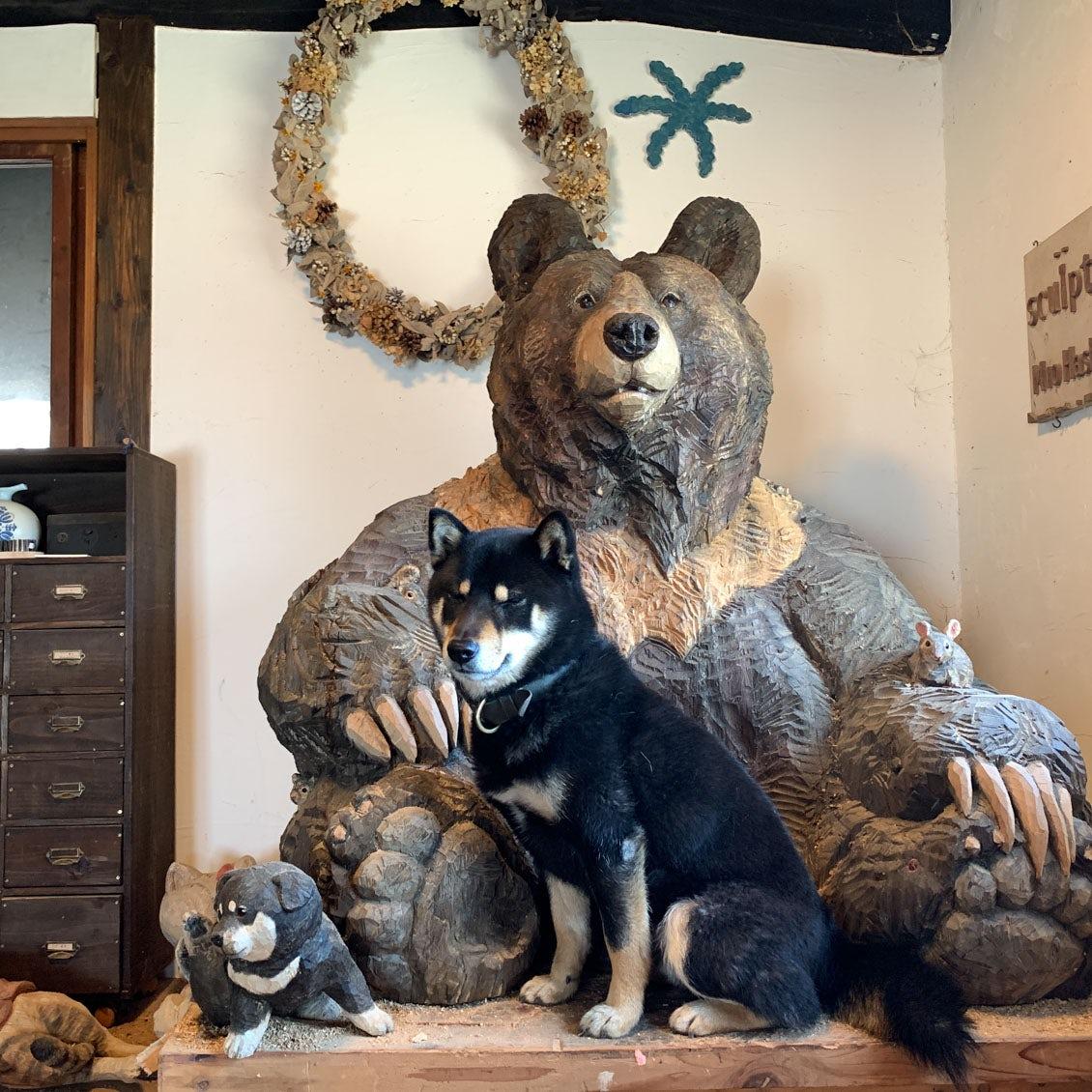 【うちのイヌ、うちのネコ】彫刻のモデルにも!築80年の古民家で暮らす、柴犬・月くんと彫刻家はしもとみおさん