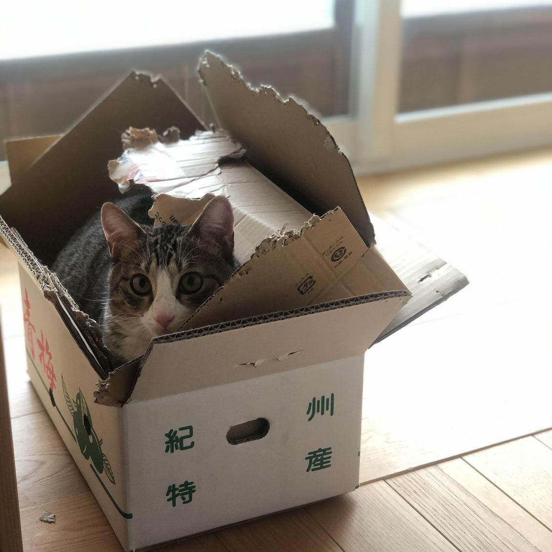 【うちのイヌ、うちのネコ】猫を叱っても、猫には通用しない? in-kyo店主・長谷川ちえさんがこの一年で再発見した暮らしとは
