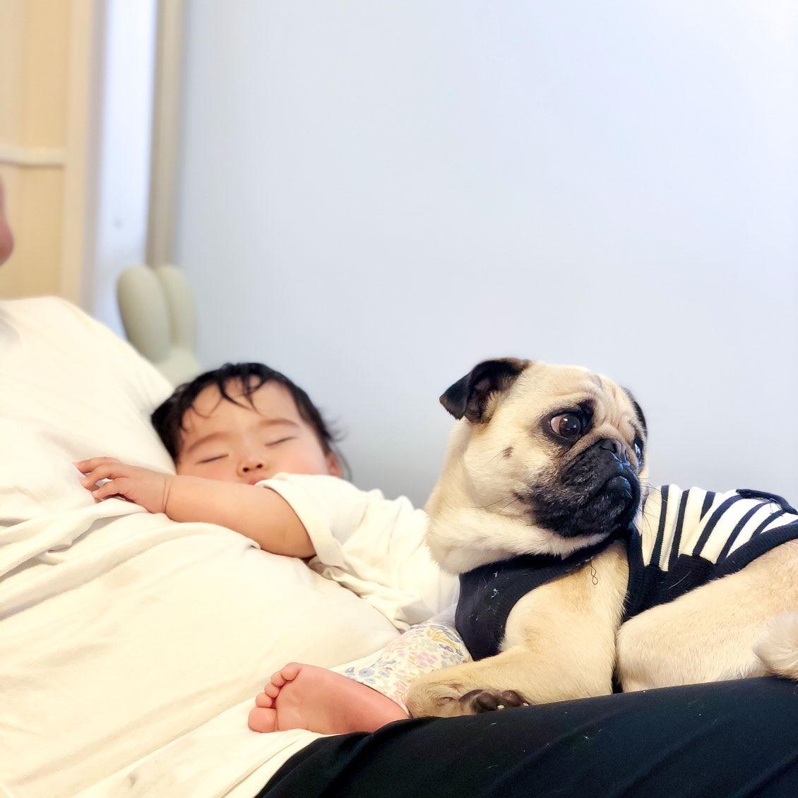 【うちのイヌ、うちのネコ】焼き鳥屋でひらめいた「つくね」という名前。家族に笑顔をはこんでくれる、パグとの暮らし。