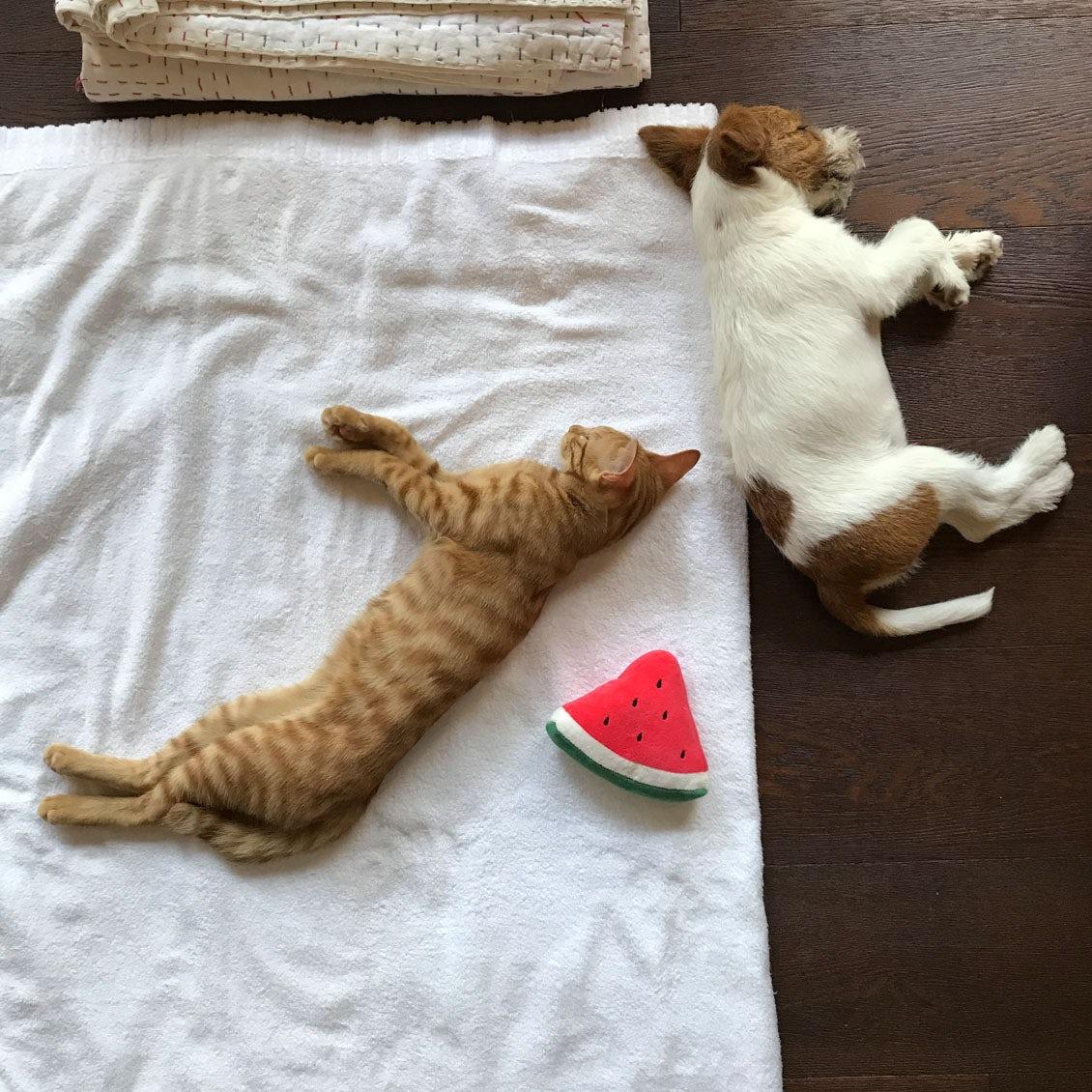 【うちのイヌ、うちのネコ】まるで双子のよう、2020年生まれの子犬と子猫とのにぎやかな暮らし