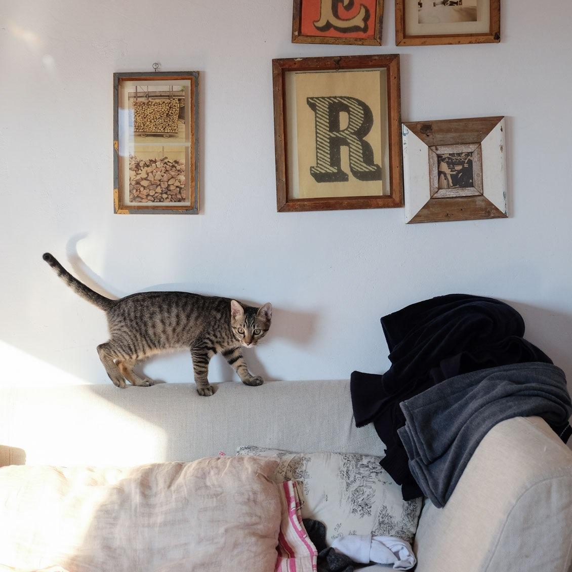 【うちのイヌ、うちのネコ】猫との暮らしを再スタート。「オルネ・ド・フォイユ」店主・谷あきらさんと元気な子猫2匹