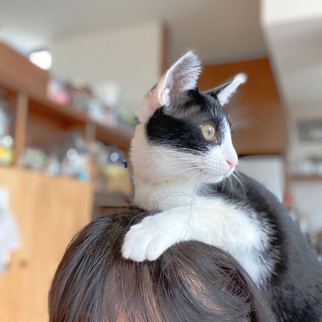 【うちのイヌ、うちのネコ】飼い始めて半年で、みんなの中心的存在に。料理家・瀬戸口しおりさんと愛猫・セリの暮らし