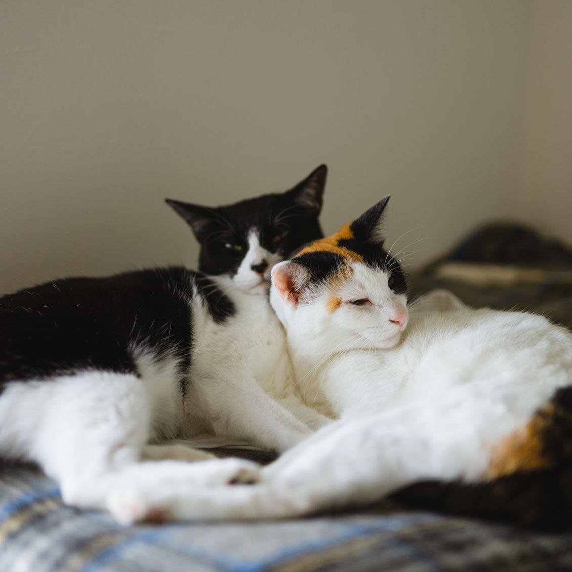 【うちのイヌ、うちのネコ】猫との暮らしで気づいた、コミュニケーションの新しい視点
