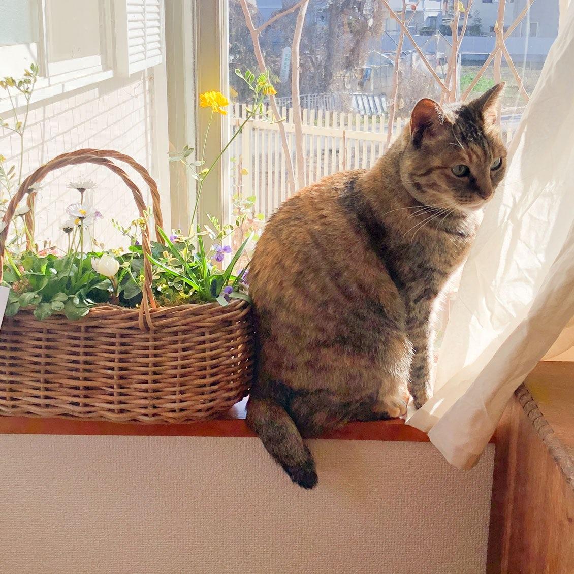 【うちのイヌ、うちのネコ】キャンドル制作のあいまに訪れる、猫との時間
