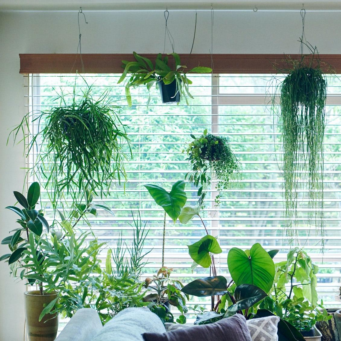 【植物のある暮らし】第1話:プロに教わる、観葉植物を楽しむ7つのコツ