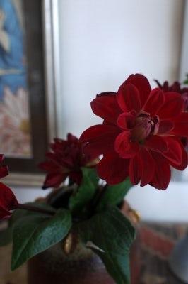 クラシノート-植物とお花のある暮らしー 【香川県・Tさま】