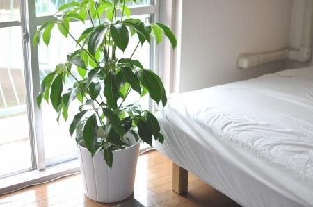 クラシノート-植物とお花のある暮らしー 【スタッフ桑原】