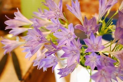 今日のお花。