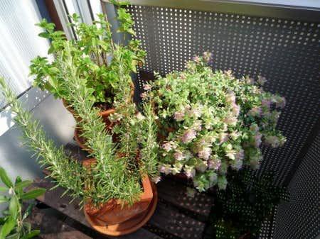 クラシノート-植物とお花のある暮らしー 【神奈川県・yukiepamさま】