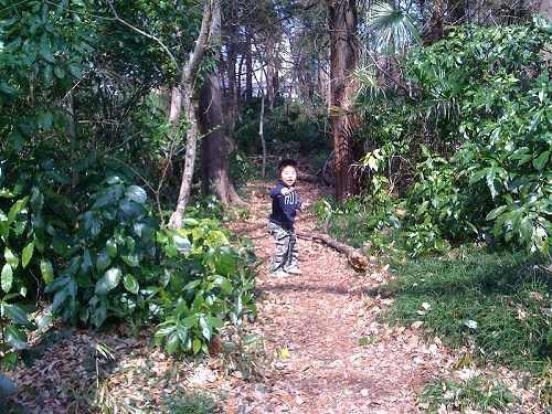 森へ探検。